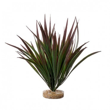 Blue Ribbon Amazonian Plant with Gravel Base Plum - 10 in. Tall