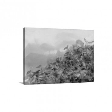 Song of the flower Wall Art - Canvas - Gallery Wrap