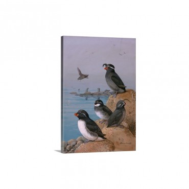 A Painting Of Four Different Species Of Auklet Wall Art - Canvas - Gallery Wrap
