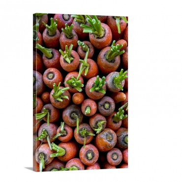 A Stack Of Carrots Wall Art - Canvas - Gallery Wrap