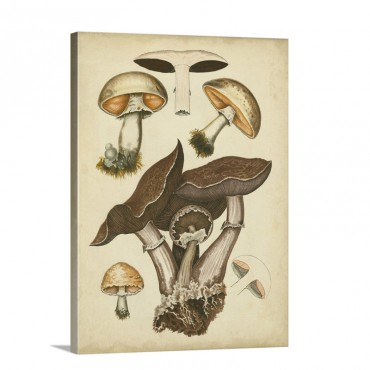 Antique Mushrooms I I Wall Art - Canvas - Gallery Wrap