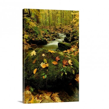 Autumn View Shows Fallen Leaves On Rocks Next To A Mountain Stream Wall Art - Canvas - Gallery Wrap
