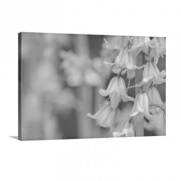Bluebells In Abstract Wall Art - Canvas - Gallery Wrap