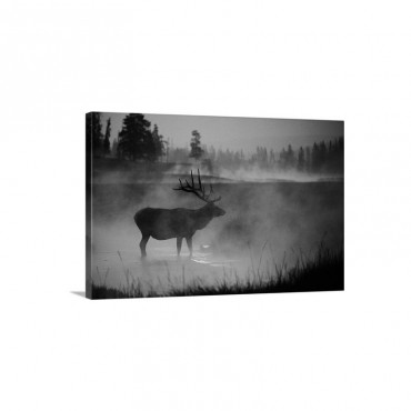 Bull Elk In The Early Morning Yellowstone National Park Wyoming Wall Art - Canvas - Gallery Wrap