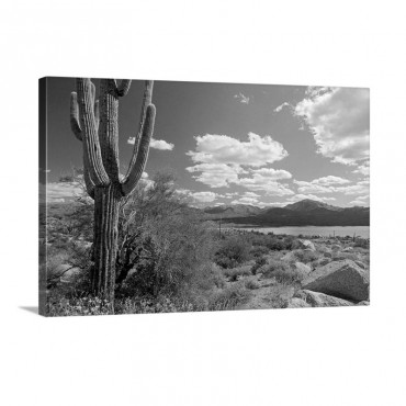 Desert Scene With Saguaro Cactus Bartlett Lake Tonto National Forest Arizona Wall Art - Canvas - Gallery Wrap