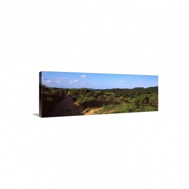 Dirt Road Passing Through A Landscape Maputaland Coastal Forest Mosaic South Africa Wall Art - Canvas - Gallery Wrap