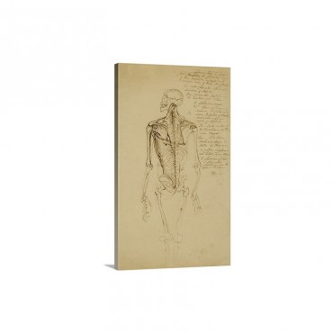 Drawing Of A Man's Skeleton Wall Art - Canvas - Gallery Wrap