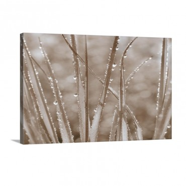 Grass Whispers In Sepia Wall Art - Canvas - Gallery Wrap