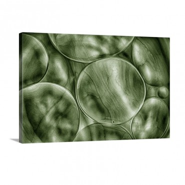 Green Cells Wall Art - Canvas - Gallery Wrap
