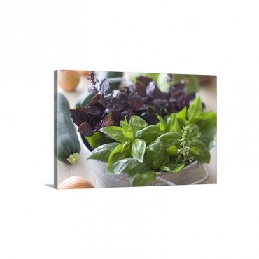 Green And Purple Basil - Canvas - Gallery Wrap