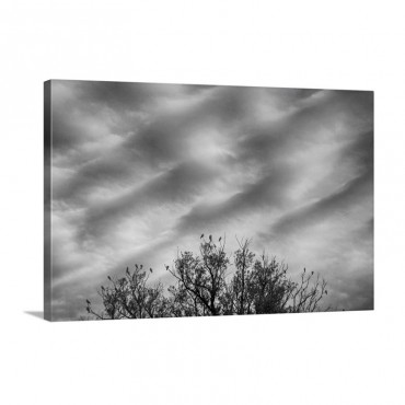 Home to Roost Wall Art - Canvas - Gallery Wrap