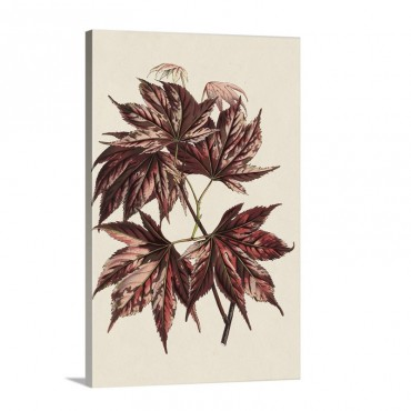 Japanese Maple Leaves I I Wall Art - Canvas - Gallery Wrap