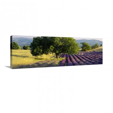 Lavender Flowers In A Field Drome Provence France Wall Art - Canvas - Gallery Wrap