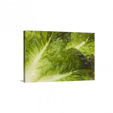 Lettuce Wall Art - Canvas - Gallery Wrap
