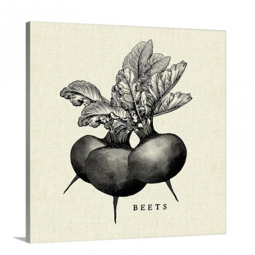 Linen Vegetable BW Sketch Beets Wall Art - Canvas - Gallery Wrap