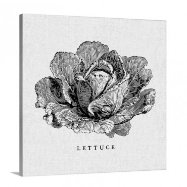 Linen Vegetable BW Sketch Lettuce Wall Art - Canvas - Gallery Wrap