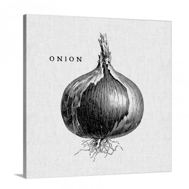 Linen Vegetable BW Sketch Onion Wall Art - Canvas - Gallery Wrap