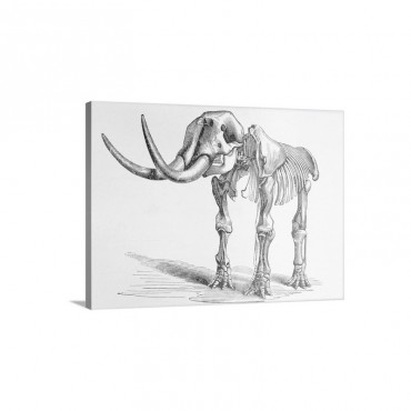 Mastodon Skeleton Wall Art - Canvas - Gallery Wrap