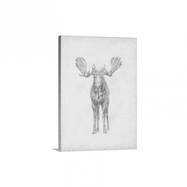 Moose Study Wall Art - Canvas - Gallery Wrap