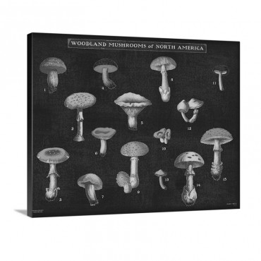 Mushroom Chart I Wall Art - Canvas - Gallery Wrap