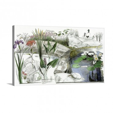 NGS Picture Id 435361 Wall Art - Canvas - Gallery Wrap