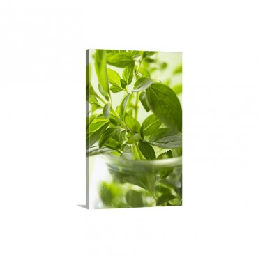 Oregano In Bowl Close Up Wall Art - Canvas - Gallery Wrap