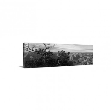 Pinyon Pine On Rim Trail South Rim Grand Canyon National Park Arizona Wall Art - Canvas - Gallery Wrap