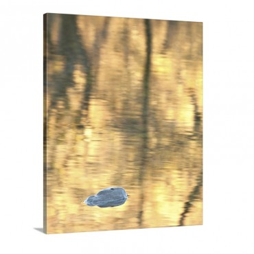 Reflections In Yellow Wall Art - Canvas - Gallery Wrap