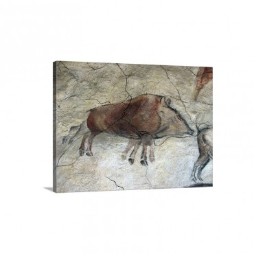 Replica Of Cave Painting Of Boar From Altamira Cave Wall Art - Canvas - Gallery Wrap