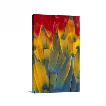 Scarlet Macaw Ara Macao Close Up Of Colorful Feathers Wall Art - Canvas - Gallery Wrap