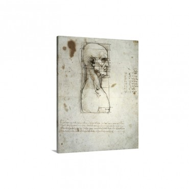 Sketch Of The Head Proportions Base On Vitruvius Wall Art - Canvas - Gallery Wrap