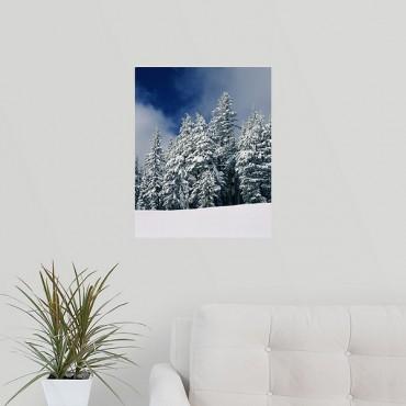 Snow Covered Western Hemlock