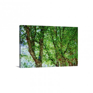 Trees Wall Art - Canvas - Gallery Wrap