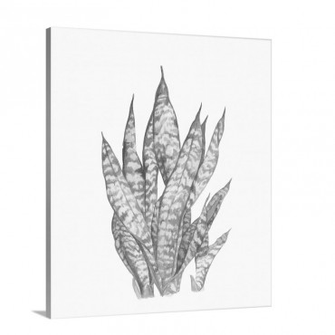 Tropical Botanicals 3 Wall Art - Canvas - Gallery Wrap