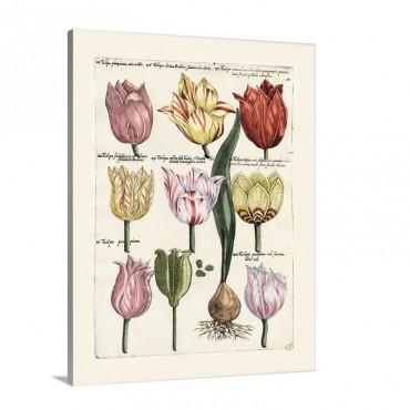 Tulips En Masse I I Wall Art - Canvas - Gallery Wrap