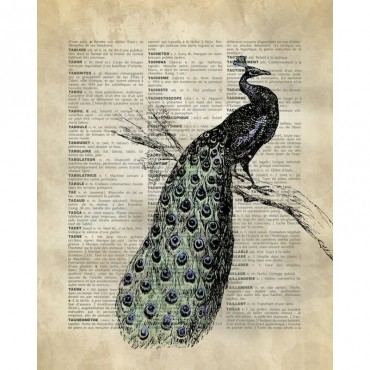 Vintage Dictionary Art Peacock