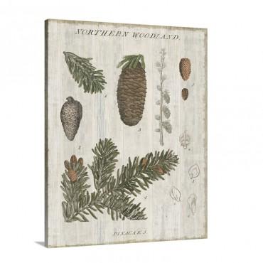 Woodland Chart I V Wall Art - Canvas - Gallery Wrap