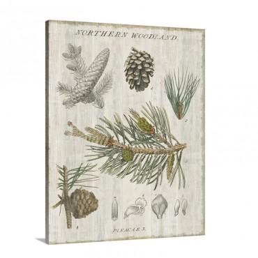 Woodland Chart I I I Wall Art - Canvas - Gallery Wrap